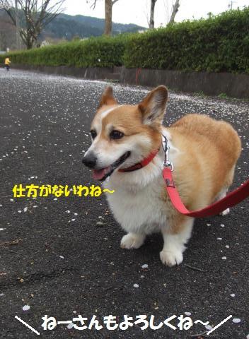 072_convert_20150413224501.jpg