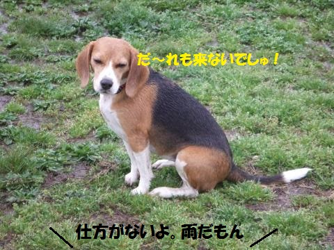 101_convert_20150405214455.jpg