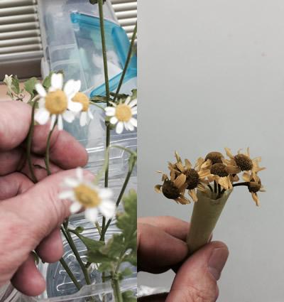 野菊を作ってみた