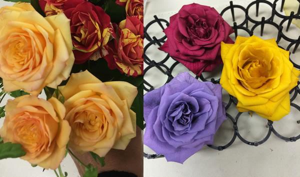 rose150130-1yoko.jpg