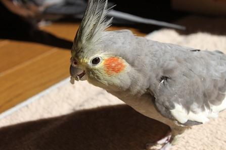 困った鳥さんです