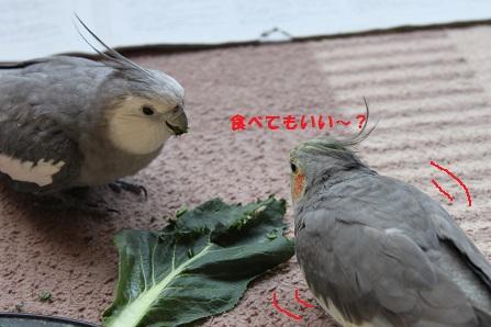 放鳥ちゅう~