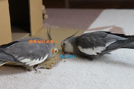 お手伝いちゅう~