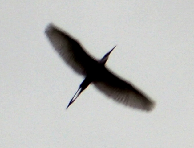 P5280032.jpg