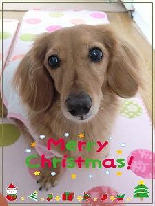 クリスマス20141