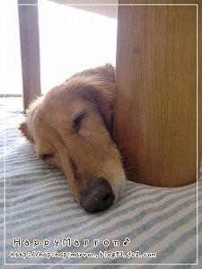 脚と昼寝2