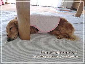 脚と昼寝1