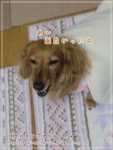 いじわるマロン4