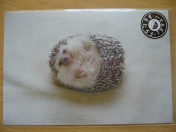 ハリネズミのポストカードを購入