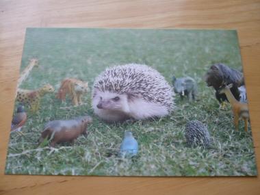 ハリネズミのポストカードを購入♪20155
