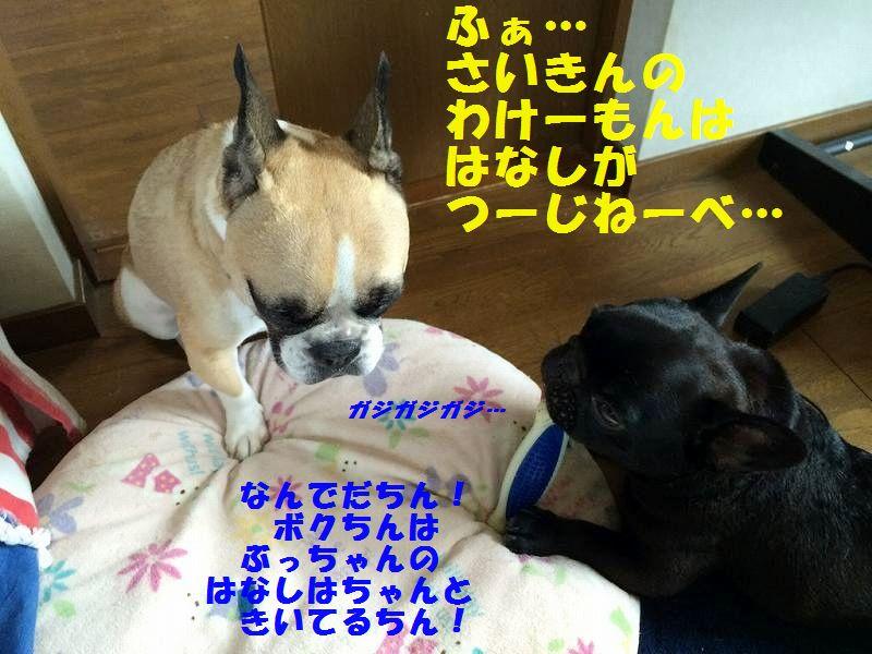 IMG_3299_20150811104203fe6.jpg