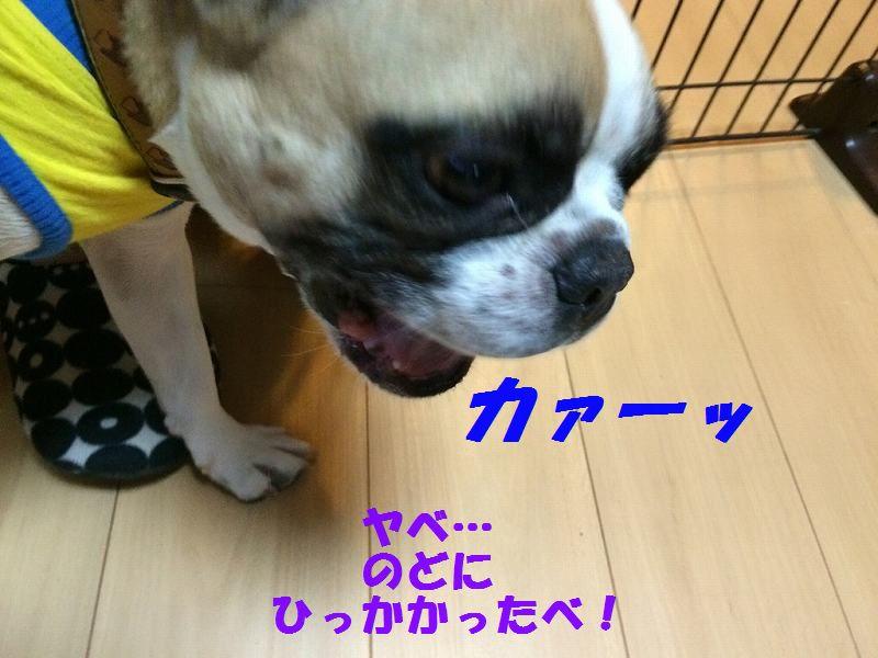 IMG_5878.jpg