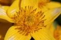 早春の花5