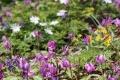 早春の花3