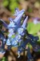 早春の花10