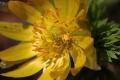 早春の花9