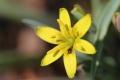 早春の花8