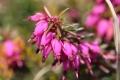 早春の花15