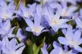 早春の花16