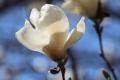 ままぎゅうの春2