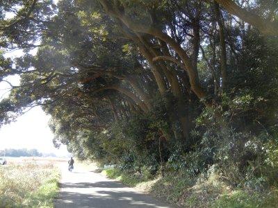 豊寿園南斜面林・スダジイ群