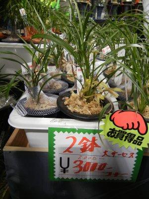 箱根香蘭亭の掘り出し物