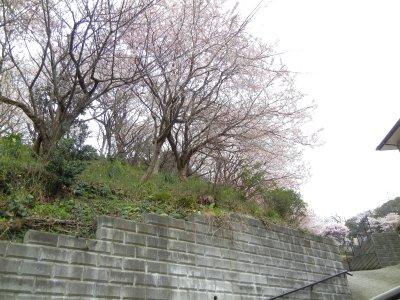 桜・杉山神社~法性寺