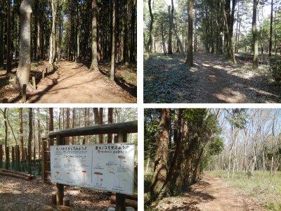 県民の森1