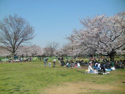 花見の木場公園