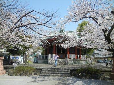 洲崎神社の桜