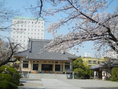 霊厳寺の桜