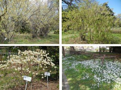 桜以外の花/小石川植物園
