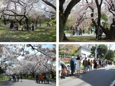小石川植物園の団体さん