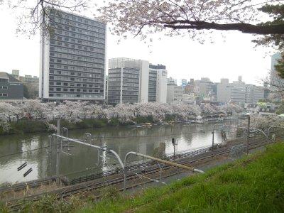 神楽坂・外堀通りの桜並木