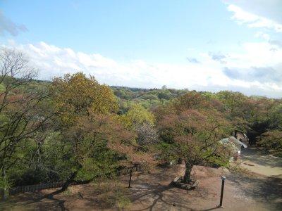 南側の眺望
