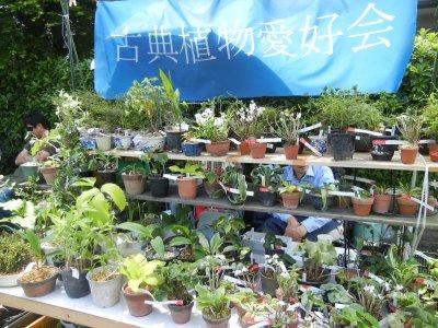 古典植物愛好会