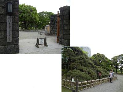 大手門と三百年の松