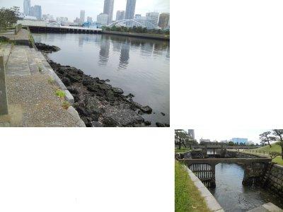 浜離宮の東京湾側