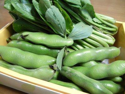 頂戴した空豆と小松菜