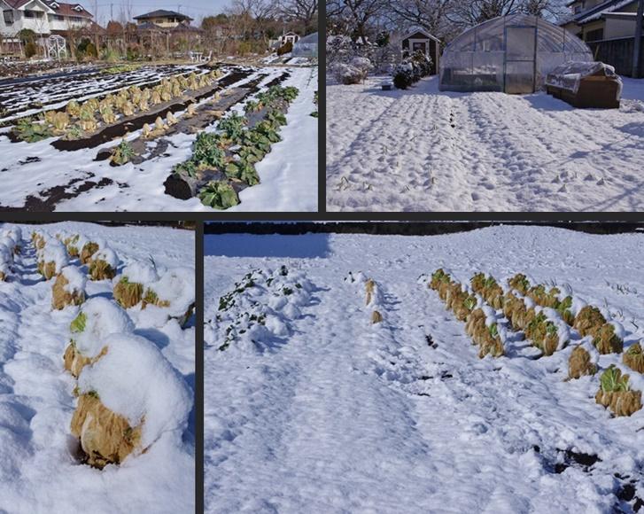 2014-02-12 2014-02-12 001 005-horz-vert