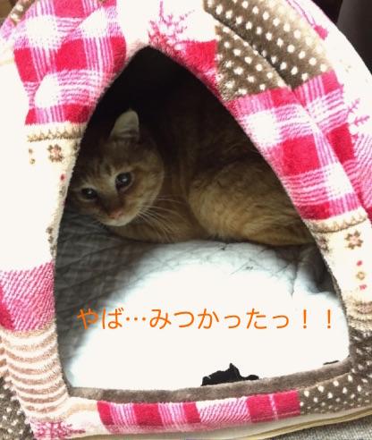 IMG_8056.jpg