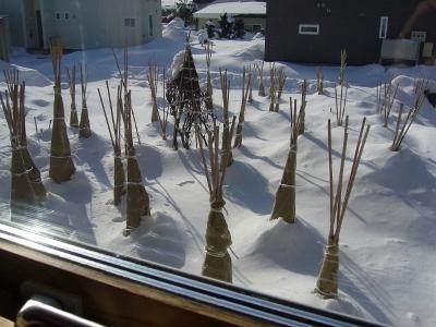 冬の晴れ間2