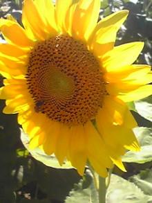 加古川 太陽光発電 販売会社エコプラスワンの太陽光発電 施行実績ブログ-110717_1543~01.jpg