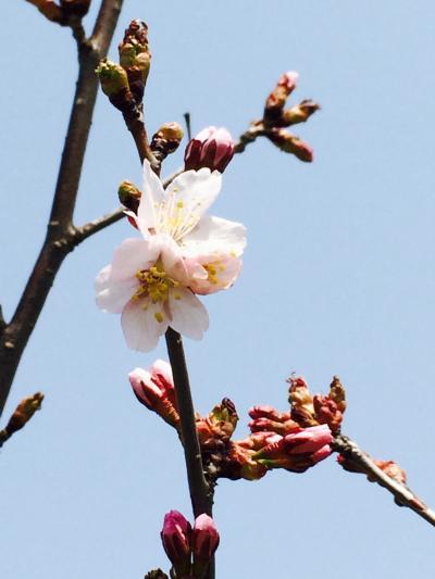 2015.4.28桜3