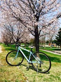 2015.5.6神楽岡公園4