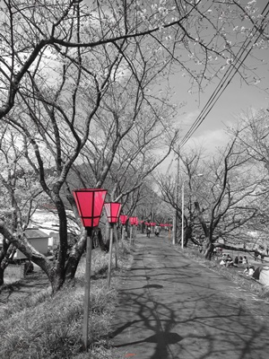 2015_0328桜ポタ0035
