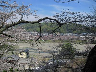 2015_0328桜ポタ0054