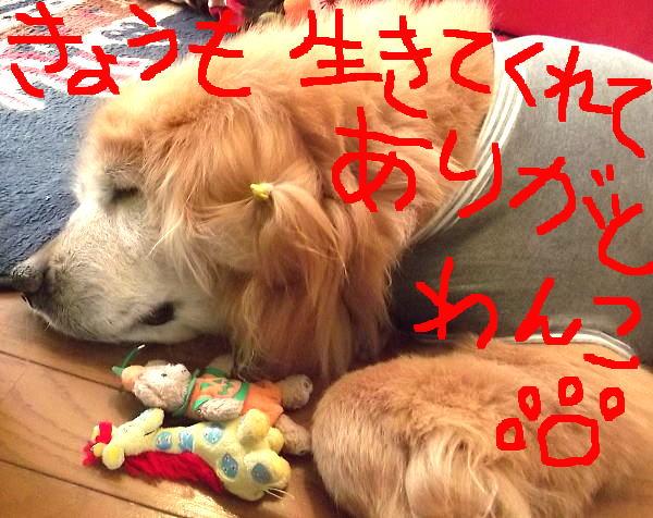 2015年4月30日(木)ラヴィン①