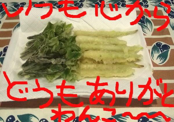佐々木さんから頂いた天ぷらちゃん