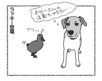 羊の国のラブラドール絵日記シニア!!「チェイスの苦手」2